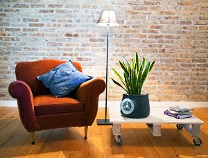 Воздухоочиститель из умного горшка и растения