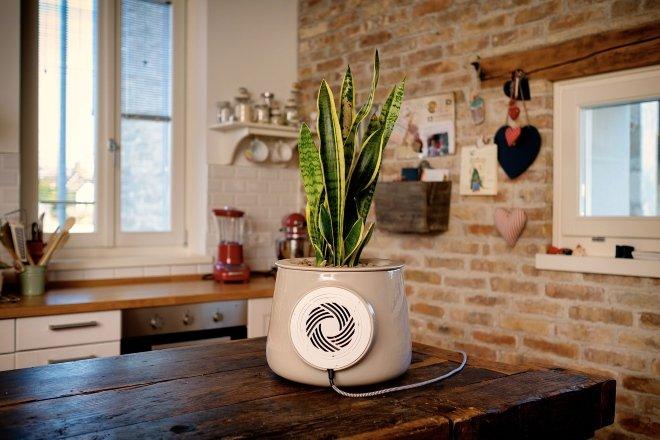 Очиститель воздуха с растением