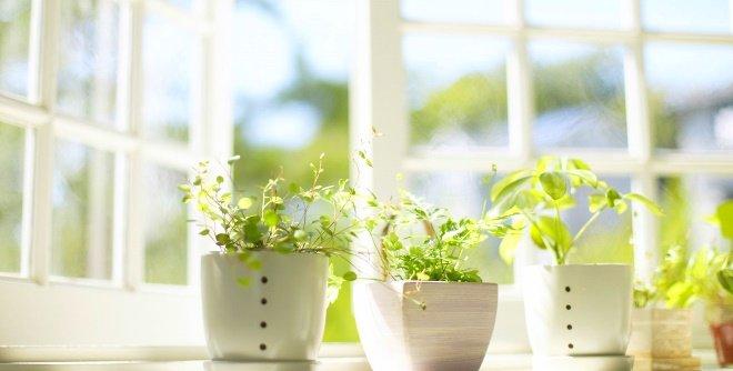 Как увлажнять воздух в квартире в летнее время